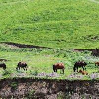 на лугу пасутся кони... :: Любовь ***