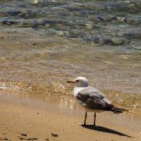 Прогулка по пляжу :: Darina Mozhelskaia