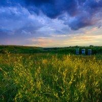 Разноцветье... :: Влад Никишин