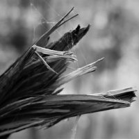 Дом паука :: Simon Kuvshinnikoff