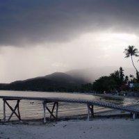 Надвигается тропический ливень :: Алина Меркурьева