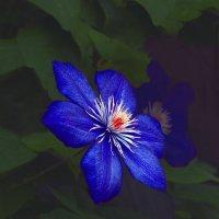 Синий цветок :: Дубовцев Евгений