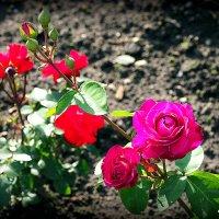 все цветы мне надоели,кроме :: Олег Лукьянов