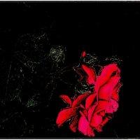 Красная розочка :: Нина Корешкова