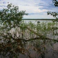 На озере. :: Андрей Климов