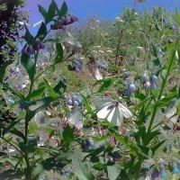 Бабочки :: Лариса Димитрова