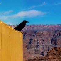 Черный ворон по-над пропастью каньона :: Андрей Крючков