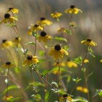 цветы.. :: Александр Калинкин