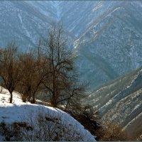 Аргунское ущелье :: OLEG SCH