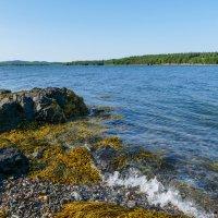 Морской залив Фанди (Канада). Ждем, чтобы переправиться посуху на остров... :: Юрий Поляков