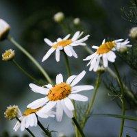 Улыбка природы :: Полина Фомина