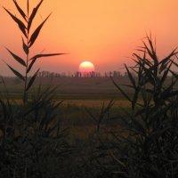 Август.Закат солнца... :: Танцюра Татьяна