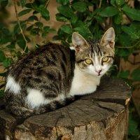 Грустный котенок на пеньке :: Светлана