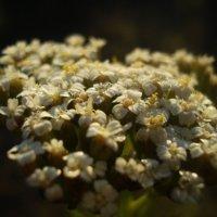 Интересный цветок :: Дарья Лаврухина