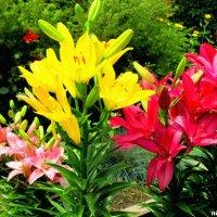 Летнее разноцветье :: Нина Бутко