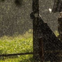 Летний дождь :: Александр
