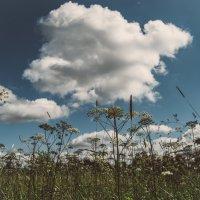 Зонтики в небе :: Александр Долгов