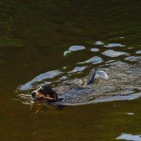 Ну, очень водоплавающая собачка :: Андрей Лукьянов