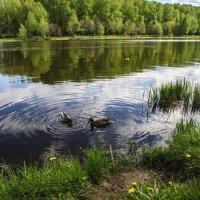 Тимирязевский пруд :: Tatiana Poliakova