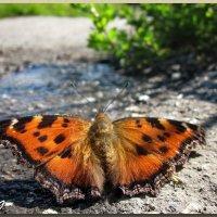 Бабочка :: OLLES