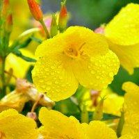 Жёлтый цветок :: Роман Кудрин