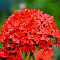 Аленький цветок :: Роман Кудрин