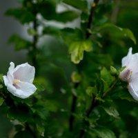 Цветы в вечерней росе :: Дмитрий Звонарев
