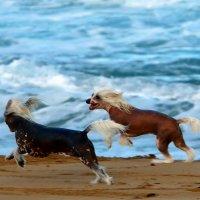 на нашем пляже :: vasya-starik Старик