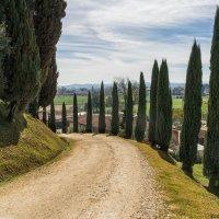 Тоскана. окрестности Винчи. Дорога в винодельческое хозяйство. :: Надежда Лаптева