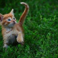 Отпрыск моего котейки... :: Татьяна Евдокимова