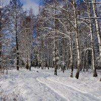 Зимние берёзки :: Александр Крупский