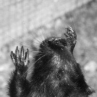 даруй мне боже, крысинного счастья! :: M Marikfoto