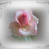 Цветёт диковинная роза... :: Людмила Богданова (Скачко)