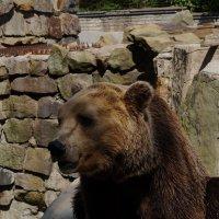 Танцующий медведь :: Ирина Шурлапова