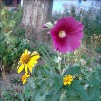 Август в нашем дворе :: Нина Корешкова