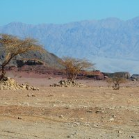 В пустыне :: Николай Танаев
