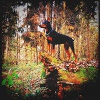 Лесная прогулка! :: Натали Пам
