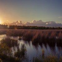 Птичий заповедник :: Gennadiy Karasev