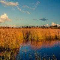 На болоте :: Gennadiy Karasev