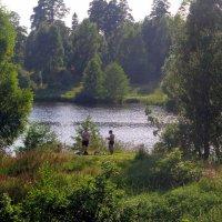 Лето на Барских прудах. :: Tatyana