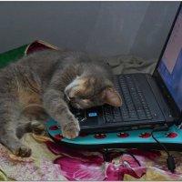 кот уставший от забот :: Николай Иванович Щенов