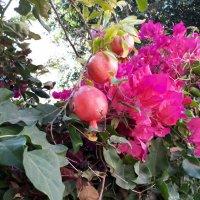 Яркость красок лета :: Герович Лилия