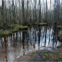 Болото *** Swamp :: Александр Борисов