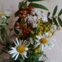 Цветы августа. :: Светлана Калмыкова