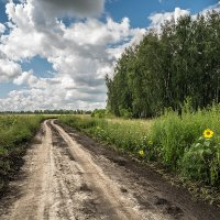 Подсолнухи у дороги :: Андрей Поляков