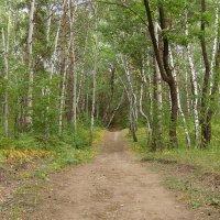 В лесу :: Светлана .