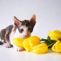 Котёнок :: Екатерина Гуща