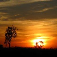 огненное дерево :: андрей иванов