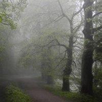 Утро туманное...... :: Юрий Цыплятников