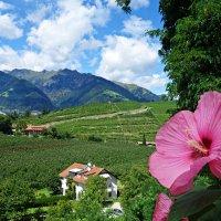 Южный Тироль(Италия) :: Galina Dzubina